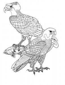 pagina da colorare Uccelli rapaci
