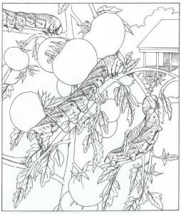 målarbok larv (1)