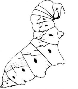 coloriage Caterpillar