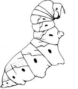 målarbok Caterpillar
