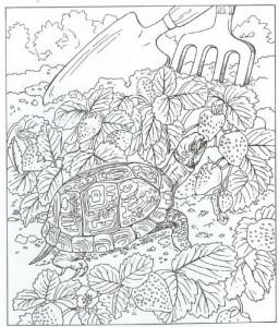 sköldpadda målarbok
