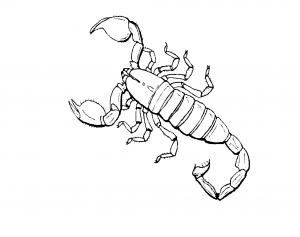 målarbok skorpion