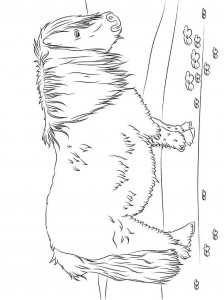 shetland coloring page