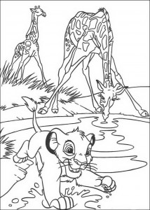 coloring page Simba drinks with the giraffes