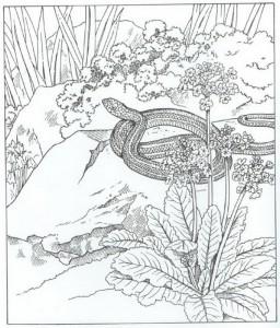 kleurplaat slang