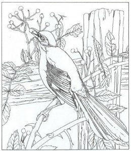 spot bird coloring page