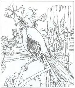 kleurplaat spotvogel