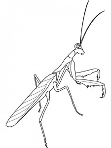coloring page Sprinkaan
