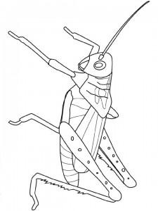 målarbok gräshoppa