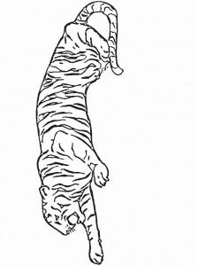 Disegno da colorare tigri (1)