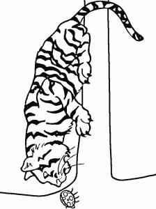 Disegno da colorare tigri (8)