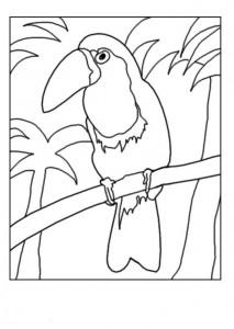 pagina da colorare Tucano
