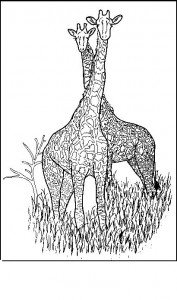 coloring page Two giraffes