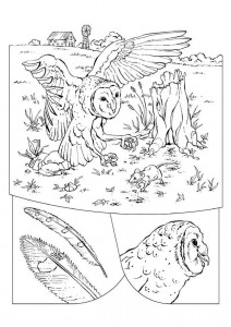 coloring page Owl (1)