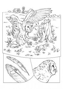 Disegno da colorare gufo (1)