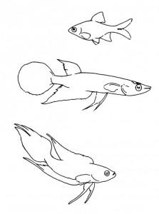 kleurplaat Vissen (12)