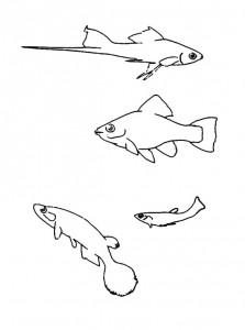 kleurplaat Vissen (15)