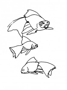 kleurplaat Vissen (19)