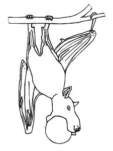 coloring page Bats (5)