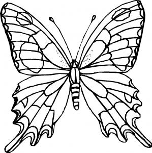 kleurplaat Vlinder (1)