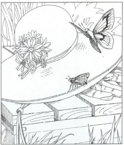 kleurplaat vlinders (1)