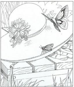målarbok fjärilar (1)