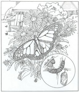 målarbok fjärilar