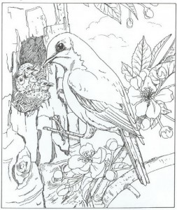 coloring page bird with boy