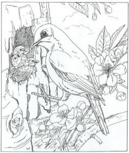 kleurplaat vogel met jongen