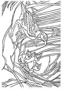 kleurplaat Vogel met nest (1)