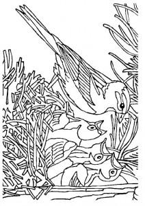 coloriage oiseau avec nid