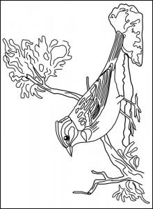 målarbok Fågel