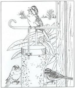 coloring page birds (1)