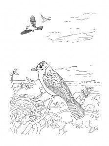 раскраска Птицы (17)
