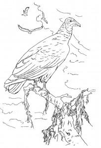 раскраска Птицы (18)