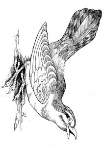 раскраска Птицы (2)