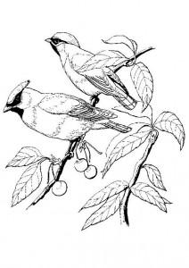 раскраска Птицы (4)