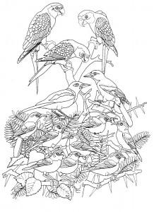 раскраска Птицы (5)