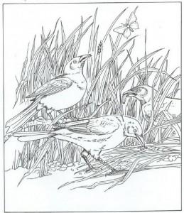 fargelegg fugler