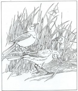 målarfåglar