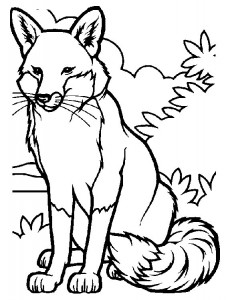 coloring page Foxes (1)