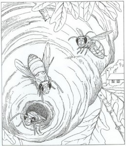 coloring wasps