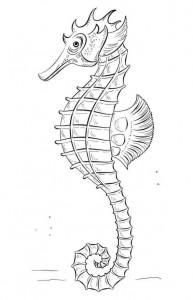 pagina da colorare Cavallucci marini (1)