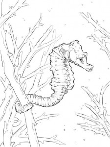coloring page Seahorses (14)