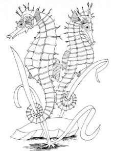 kleurplaat Zeepaardjes (2)