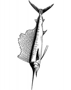 coloring page Swordfish (1)