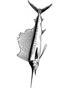 kleurplaat Zwaardvis (1)