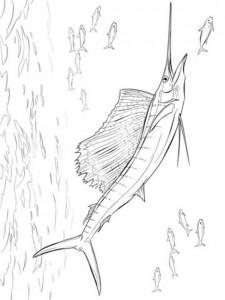 kleurplaat Zwaardvis (7)